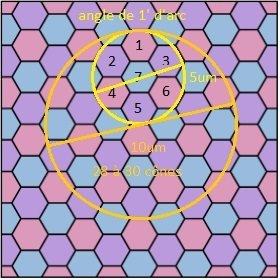 sur-echantillonage-oeil_hexagonal.jpg.b5647910affb60f4048ecf982d1e4c4f.jpg